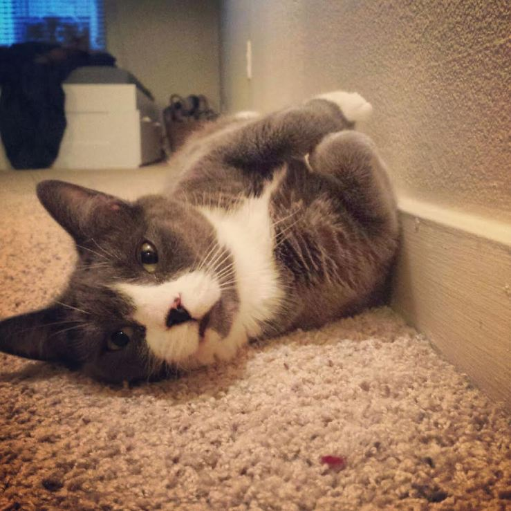 cute_cat. image rights: www.thislittlespace.com