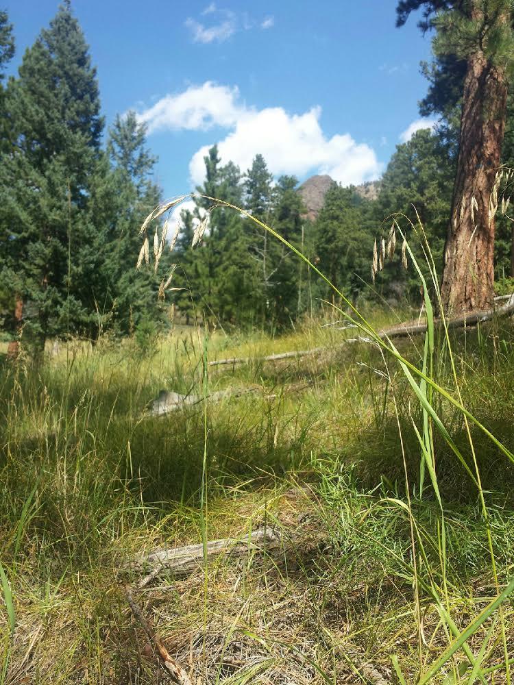 staunton state park. www.thislittlespace.com.